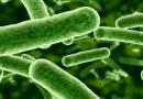 Probióticos: Nuestros pequeños aliados