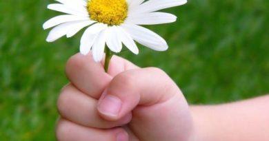 Primavera, Polen y Alergias. Como prevenirlas y evitarlas con homeopatia